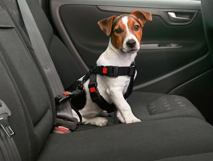 Hunde Sicherheitsgurt - Autosicherheitsgeschirr Gr. S