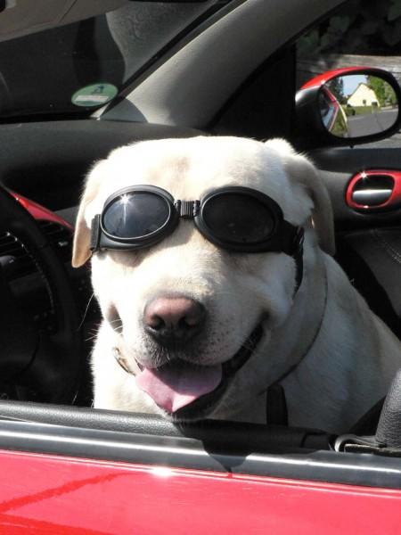 Cabrio-Brille für Hunde